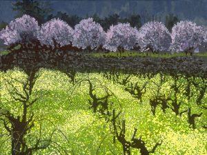 Flowering Plum in Vineyard
